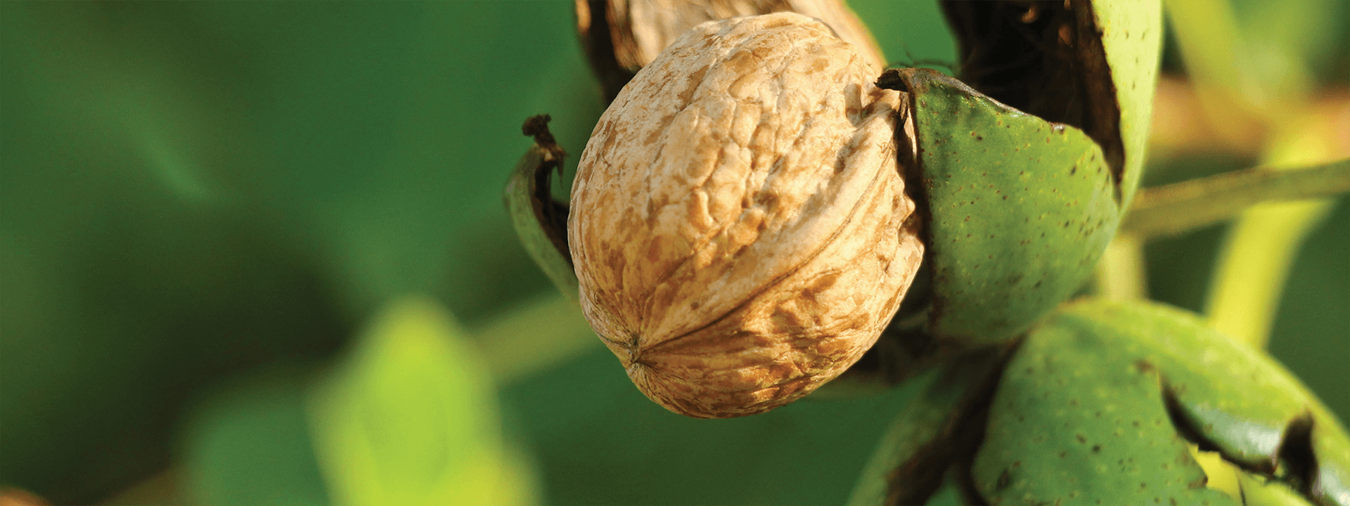 Nut Irrigation Solutions