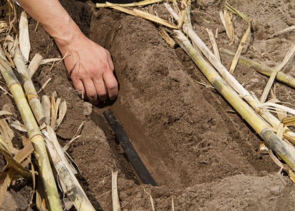 Riego enterrado para caña de azúcar